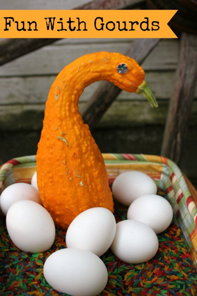 fun with gourds