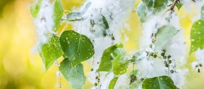 Using Essential Oils for Allergy Season